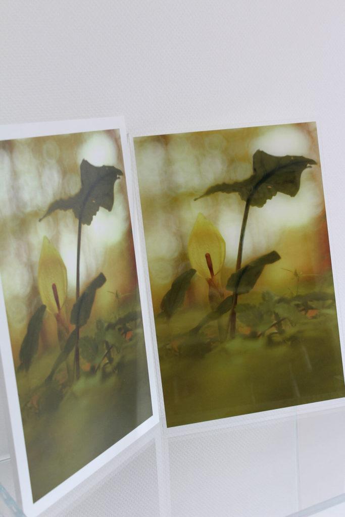 Digitaldruck auf Acrylglas oder Plexiglas - hochwertig und detailecht.