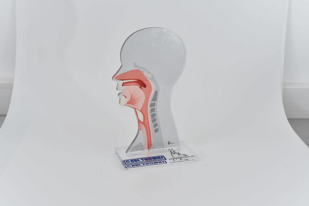 Digitaldruck auf Kunststoff für Anschauungsmaterial