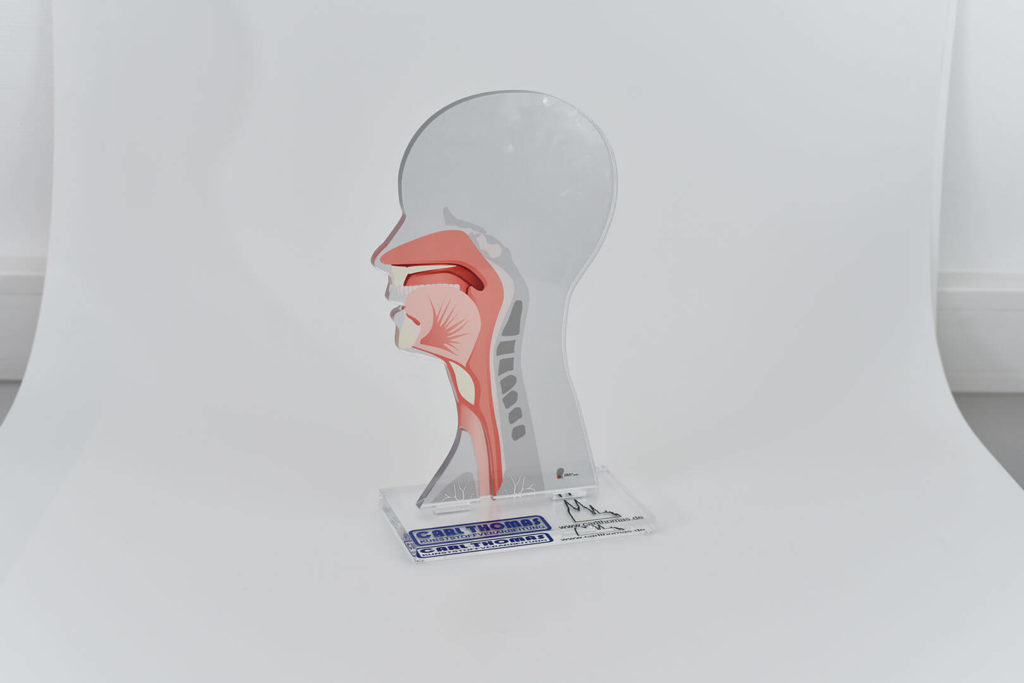Zeigt Kunststoff-Modell eines menschlichen Kopfes mit Digitaldruck der inneren Anatomie auf den durchsichtigen Kunststoff.